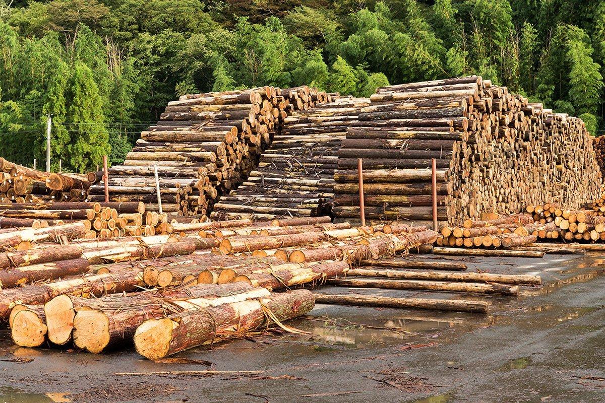 NZ Com Com investigates timber supply shortage